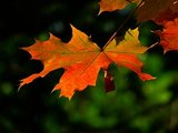 Koperdraadje Adventskalender herfst foto 3